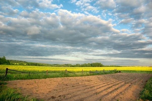 Сроки и стоимость межевания земельного участка