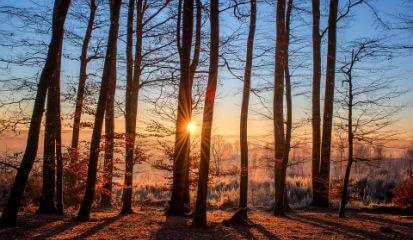 Изъятие земель лесного фонда у дачников без денежной компенсации