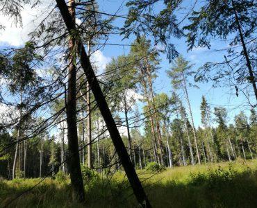 Как оформить земли лесного фонда в собственность?